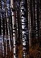 Finland 2014-03-15 (13259916875).jpg