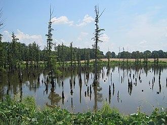 North Memphis, Memphis, Tennessee - Image: Firestone Park Frayser Memphis TN 02 from N Watkins St