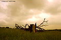 Flickr - law keven - The Great British Summer - 2008.....jpg