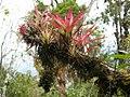 Flora Parque Nacional Manu 11.jpg