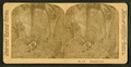 Florida hammock, from Robert N. Dennis collection of stereoscopic views 2.png