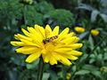 Flower-flyOnFlower.jpg