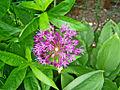 Flower Rex 8.jpg