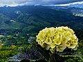 Flower horizon.jpg