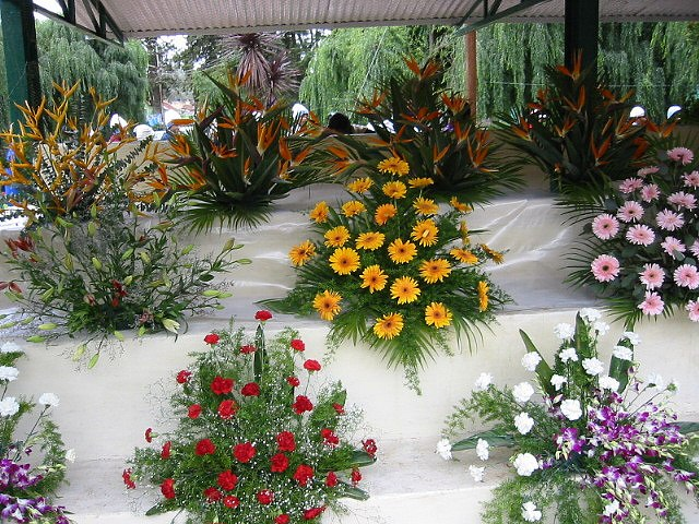 Flower show ooty