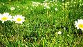 Flowers-In-Georgia.jpg