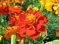 Flowers (202).jpg