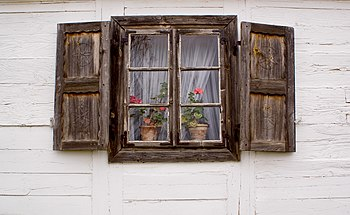 Flowers in the window.jpg
