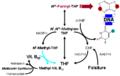 Folicacid-B12.png