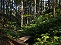 Footbridge and ferns in Gullmarsskogen ravine 2.jpg