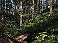 Footbridge and ferns in Gullmarsskogen ravine 2.jpg