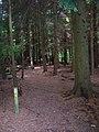 Footpath, Forge Wood - geograph.org.uk - 505846.jpg