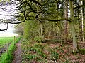 Footpath on the woodland edge - geograph.org.uk - 1267953.jpg