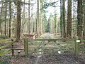 Footpath through the Wood - geograph.org.uk - 363064.jpg