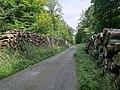 Forêt de Mormal - Nerviens 05.jpg