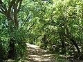 Forêt de chêne liège au Jebel Sidi Mohammed près de Cap Negro.jpg
