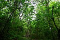 Forest entrance.jpg