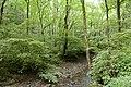 Forest in Mt.Gozen (Ibaraki) 09.jpg