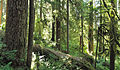 Forest on Olympic National Park Three Lakes Trail.jpg