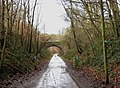Forestry road in Wyre Forest on route of former railway - geograph.org.uk - 1690949.jpg