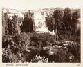 Fotografi från Latomia i Syrakusa - Hallwylska museet - 104049.tif
