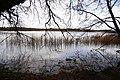 Frensham Great Pond - geograph.org.uk - 725177.jpg