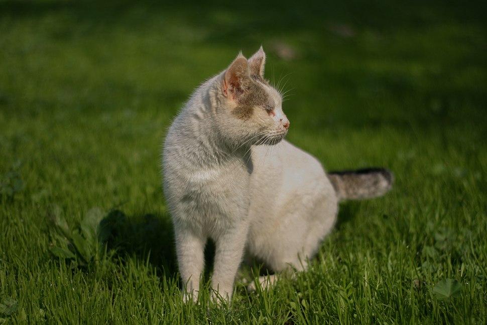 Fur - cat