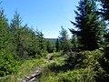 Główny Szlak Sudecki - panoramio (5).jpg