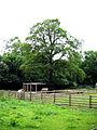 Gammelmosen horses.jpg