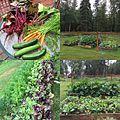 GardenAK.jpg