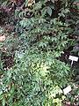 Gardenology.org-IMG 1145 rbgs10dec.jpg