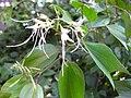 Gardenology.org-IMG 2330 ucla09.jpg