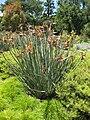 Gardenology.org-IMG 9875 rbgm10dec.jpg