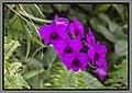 Gardens by the Marina Bay-54 (8337632478).jpg