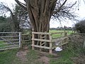 Gate by orchard - geograph.org.uk - 649756.jpg