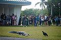 Gator spy, NPSPhoto, L.Coldiron 2013 (9099197575).jpg