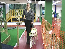 A light-colored Yellow Lab in a guide dog harness walks to the left of a woman with light blonde hair who is wearing black slacks and a gray sweater. She is holding onto the handle of the dog's harness with her left hand, holding a slim white cane in her left hand, and they both face the camera. To their right is what appears to be a simulated street curb with artificial grass. To their right is an orange barrier such as might be found at a construction site in a city.