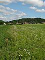 General weeds1-1.jpg