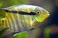Georgia Aquarium (4663503572).jpg