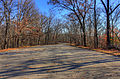 Gfp-missouri-babbler-state-park-road-in-babbler.jpg
