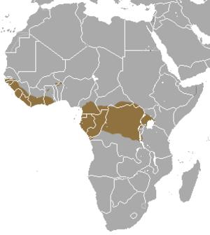 Giant pangolin - Image: Giant Pangolin area