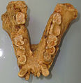 Gigantopithecusjaw.jpg