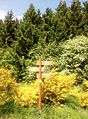 Ginsterblüte Dreiborner Hochfläche 2015.jpg