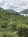 Glenveagh National Park Flora.jpg