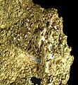 Gold-cat04d.jpg