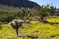 Gold Butte fall blooms (19357595843).jpg