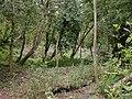 Golden Hill, community woodland - geograph.org.uk - 1475923.jpg