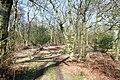 Gonder Lane Wood - geograph.org.uk - 1209312.jpg