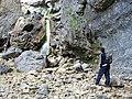 Gordale Scar scramble - geograph.org.uk - 1721517.jpg