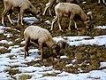 Grand Teton National Park (8478714217).jpg